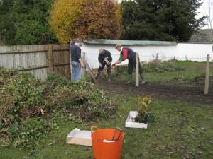 Jubilee Hedge Nov 2012 _004