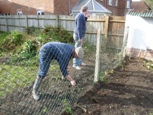 Jubilee Hedge Nov 2012 _009